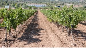 barossa valley winery