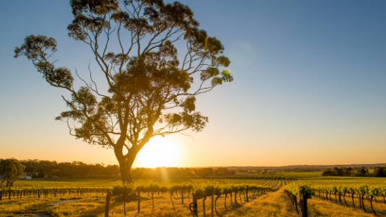 barossa valley drive south australia